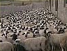 Argentina: från köttproducenter till exkrementsproducenter